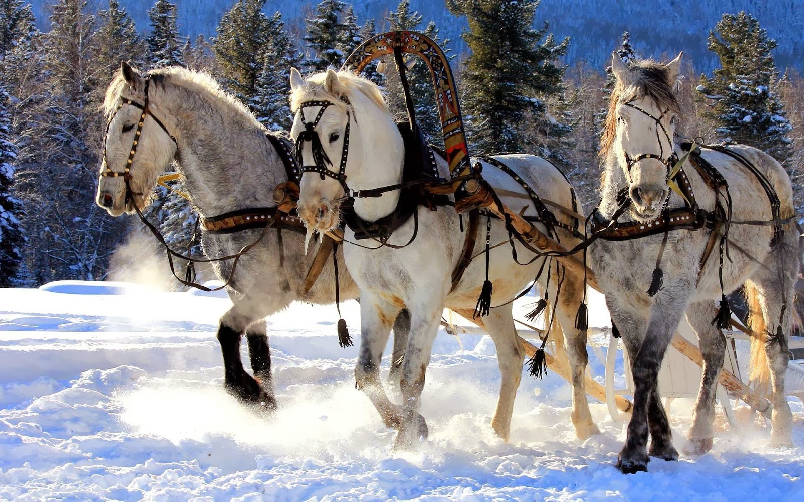 winter-achtergrond-met-witte-paarden-in-de-sneeuw-die-slee-trekken