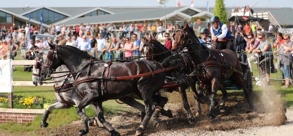Paard & Koets Horsedriving Kronenberg