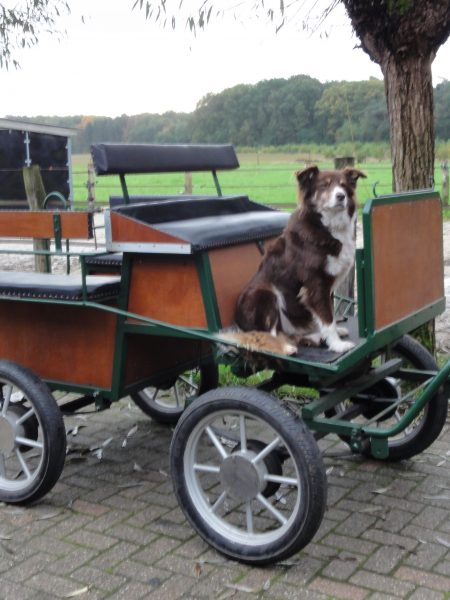 Occasion Pony recreatiewagen